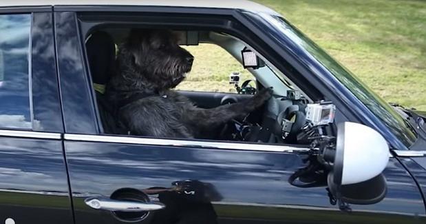 Pas za volanom